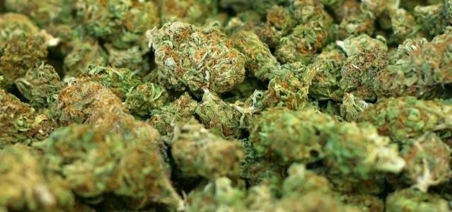 tray-of-marijuana-1331538-639x1017